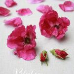 Blüten kandieren – einfach, superschön & mmhhhh