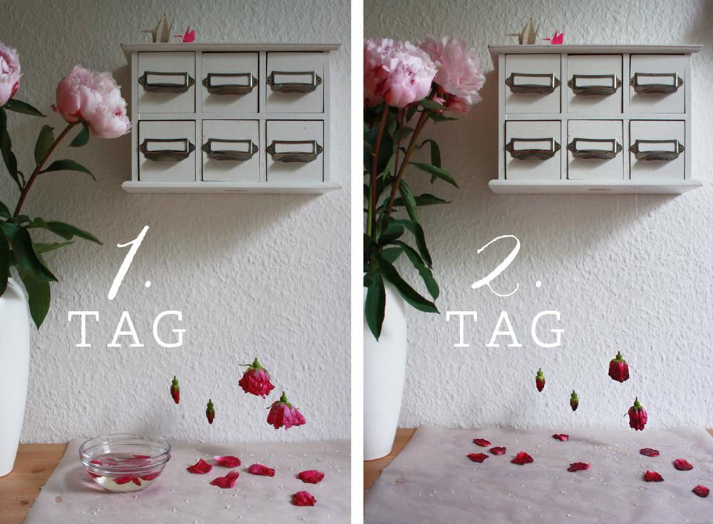 DIY Anleitung Blüten kandieren / Blumen verzuckern