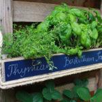 UPCYCLING DIY// Mini Kräuter Garten aus Palette