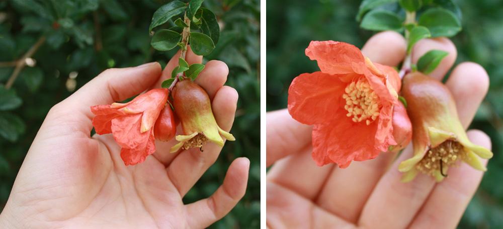 Alhambra Andalusien Granatapfel Blüte