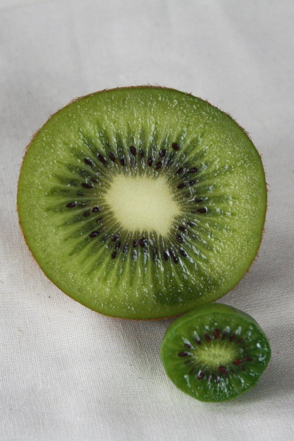 mini-kiwi-3