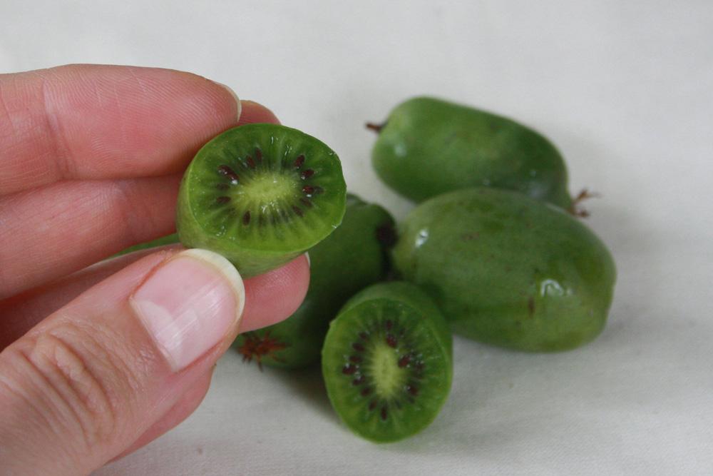 mini-kiwi-5