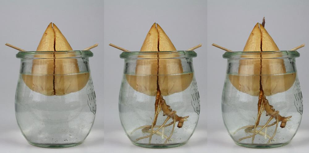 avocadobaum selber ziehen lichtschalter beschriftung. Black Bedroom Furniture Sets. Home Design Ideas